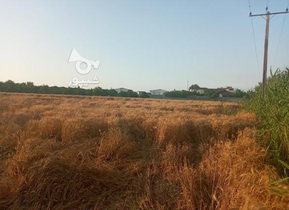 6000 متر زمین تفکیک شده در منطقه بهنمیر(کل زمین 15000 متر) در گروه خرید و فروش املاک در مازندران در شیپور-عکس2