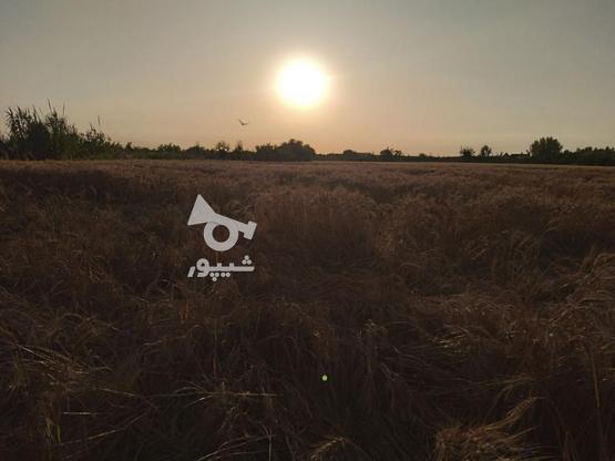 6000 متر زمین تفکیک شده در منطقه بهنمیر(کل زمین 15000 متر) در گروه خرید و فروش املاک در مازندران در شیپور-عکس3