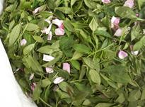 چای سرگل بهاره لاهیجان 1400 در شیپور-عکس کوچک