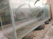 آکواریوم شیشه 12 میل طول دونیم ارتفا 80 عرض 50 در شیپور-عکس کوچک
