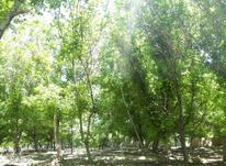 باغ روستای آستانه با موقعیت مکانی عالی در شیپور-عکس کوچک