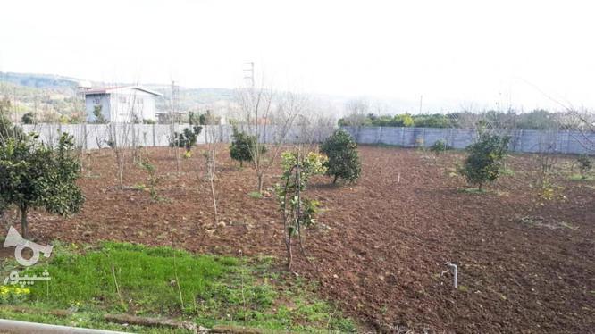 خانه باغ 3000متری روستا زیبا ریکنده در گروه خرید و فروش املاک در مازندران در شیپور-عکس3