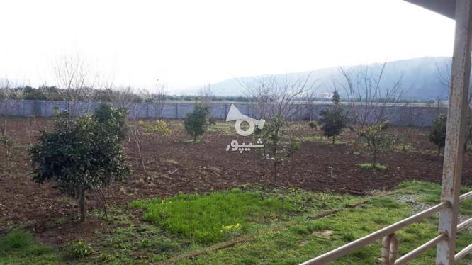 خانه باغ 3000متری روستا زیبا ریکنده در گروه خرید و فروش املاک در مازندران در شیپور-عکس8