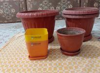 گلدون پلاستیکی در شیپور-عکس کوچک