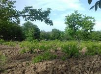 باغ انگور جاده ابریشم دانشگاه در شیپور-عکس کوچک