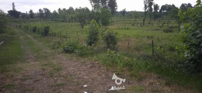فروش ویژه زمین در گیلان با کاربری در گروه خرید و فروش املاک در گیلان در شیپور-عکس2