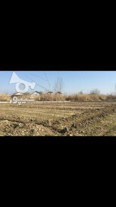 فروش ویژه زمین 215 متری منطقه غیر بومی در گروه خرید و فروش املاک در مازندران در شیپور-عکس1