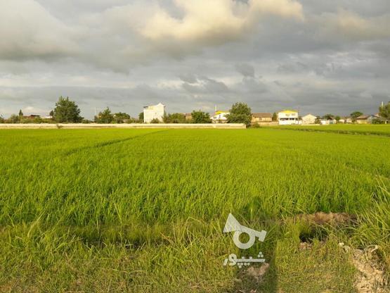 زمین کشاورزی 1700متری در گروه خرید و فروش املاک در مازندران در شیپور-عکس1