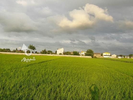 زمین کشاورزی 1700متری در گروه خرید و فروش املاک در مازندران در شیپور-عکس2