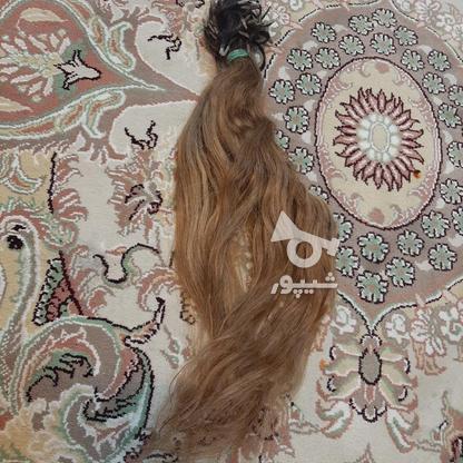 مو سر کاملا طبیعی در گروه خرید و فروش لوازم شخصی در تهران در شیپور-عکس2