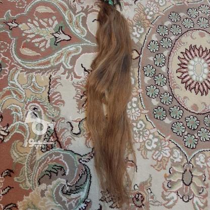 مو سر کاملا طبیعی در گروه خرید و فروش لوازم شخصی در تهران در شیپور-عکس4
