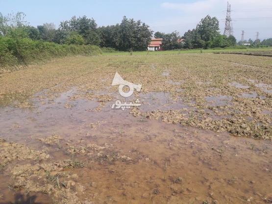 7000متر زمین کشاورزی در بهترین موقعیت مکانی در گروه خرید و فروش املاک در گیلان در شیپور-عکس5