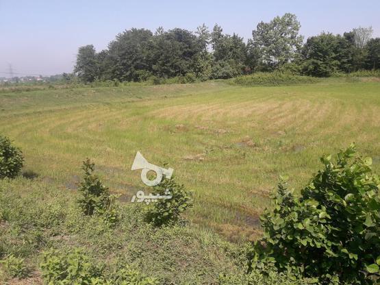 7000متر زمین کشاورزی در بهترین موقعیت مکانی در گروه خرید و فروش املاک در گیلان در شیپور-عکس8