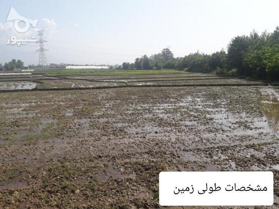 7000متر زمین کشاورزی در بهترین موقعیت مکانی در گروه خرید و فروش املاک در گیلان در شیپور-عکس6