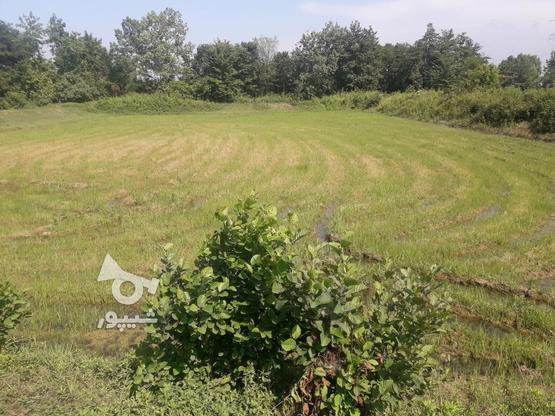 7000متر زمین کشاورزی در بهترین موقعیت مکانی در گروه خرید و فروش املاک در گیلان در شیپور-عکس4