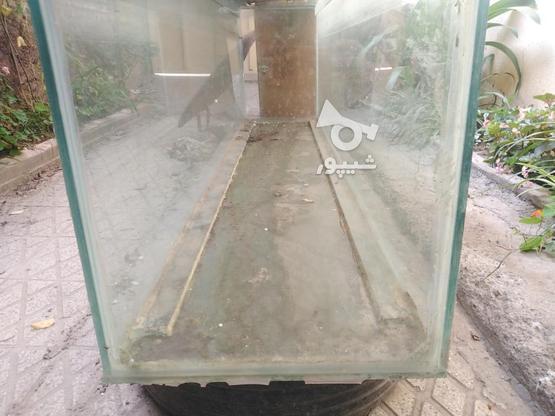 آکواریوم شیشه 12. فروش فوری با لوازم در گروه خرید و فروش ورزش فرهنگ فراغت در مازندران در شیپور-عکس2