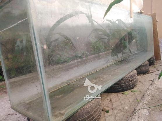 آکواریوم شیشه 12. فروش فوری با لوازم در گروه خرید و فروش ورزش فرهنگ فراغت در مازندران در شیپور-عکس1