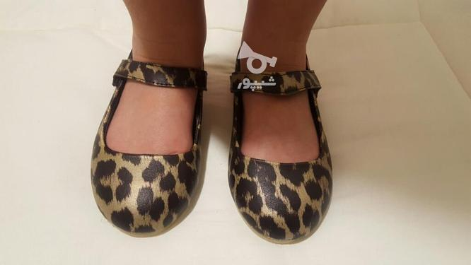 کفش پلنگی سایز 27 در گروه خرید و فروش لوازم شخصی در تهران در شیپور-عکس4