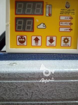 دستگاه جوجه کشی بلدرچین دماوند 126 تایی در گروه خرید و فروش صنعتی، اداری و تجاری در گلستان در شیپور-عکس1