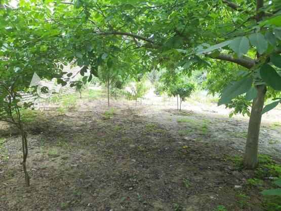 فروش فوری به علت نیاز مالی در گروه خرید و فروش املاک در مازندران در شیپور-عکس4