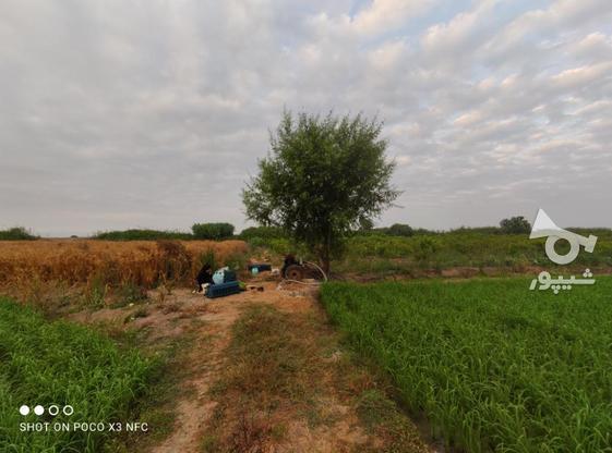 1 هکتار باغ هلو شلیل در گروه خرید و فروش املاک در مازندران در شیپور-عکس6