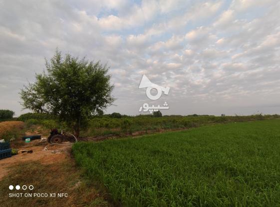 1 هکتار باغ هلو شلیل در گروه خرید و فروش املاک در مازندران در شیپور-عکس8
