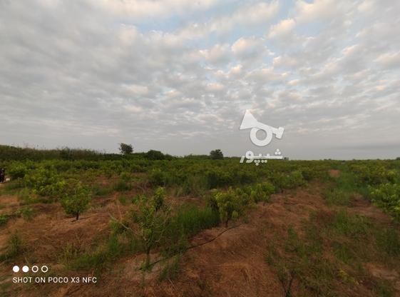 1 هکتار باغ هلو شلیل در گروه خرید و فروش املاک در مازندران در شیپور-عکس3