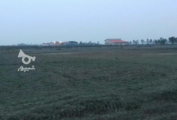 زمین کشاورزی پشت دانشگاه و در همسایگی روماک در گروه خرید و فروش املاک در مازندران در شیپور-عکس1