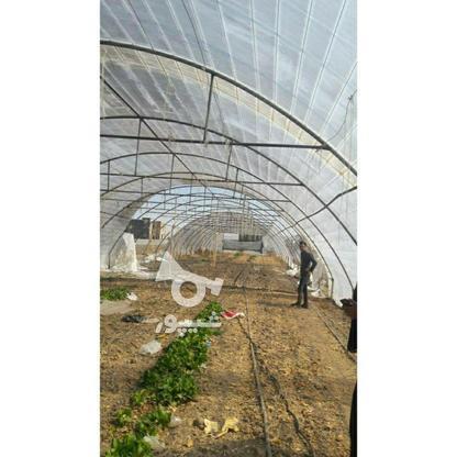 گلخانه لوله گالوانیزه در گروه خرید و فروش صنعتی، اداری و تجاری در خراسان رضوی در شیپور-عکس3