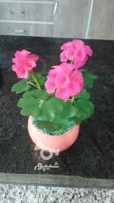 گلهای تزیینی ودکوری در گروه خرید و فروش خدمات و کسب و کار در خراسان جنوبی در شیپور-عکس6