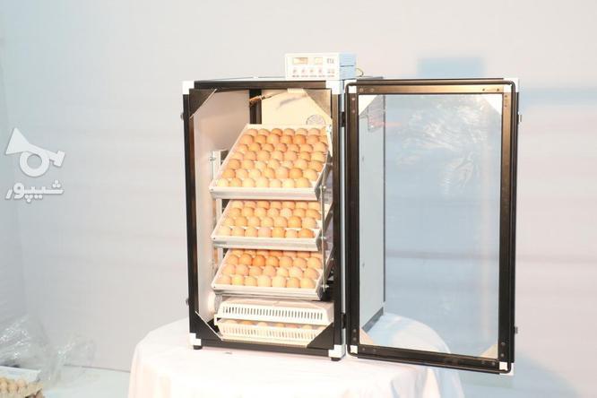 دستگاه جوجه کشی 168 تایی سوپر مینیاتور در گروه خرید و فروش صنعتی، اداری و تجاری در تهران در شیپور-عکس2