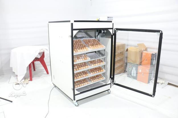 دستگاه جوجه کشی 1008 تایی سوپر مینیاتور در گروه خرید و فروش صنعتی، اداری و تجاری در تهران در شیپور-عکس2