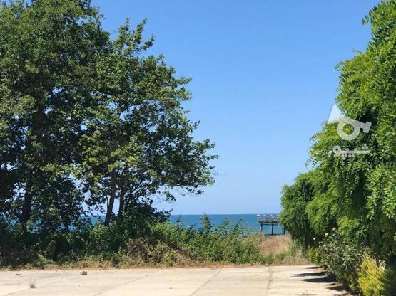 فروش 300 متر زمین ساحلی شهرک قناری در گروه خرید و فروش املاک در مازندران در شیپور-عکس2