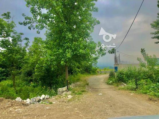 فروش زمین بافت کاملامسکونی زیرقیمت  در گروه خرید و فروش املاک در مازندران در شیپور-عکس2