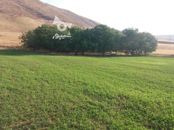 باغ و زمین کشاورزی بارانی 15هزار متر مربع در گروه خرید و فروش املاک در کردستان در شیپور-عکس1
