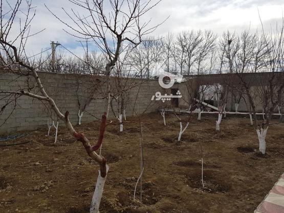550 متر باغچه واقع در خیابان سپیدار-لشگرآباد در گروه خرید و فروش املاک در البرز در شیپور-عکس4