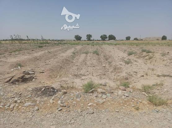 500 متر زمین واقع در پاکدشت در گروه خرید و فروش املاک در تهران در شیپور-عکس3