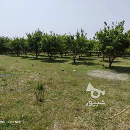 فروش زمین مسکونی 200 متر در فریدونکنار در گروه خرید و فروش املاک در مازندران در شیپور-عکس7
