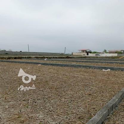فروش زمین مسکونی 200 متر در فریدونکنار در گروه خرید و فروش املاک در مازندران در شیپور-عکس3