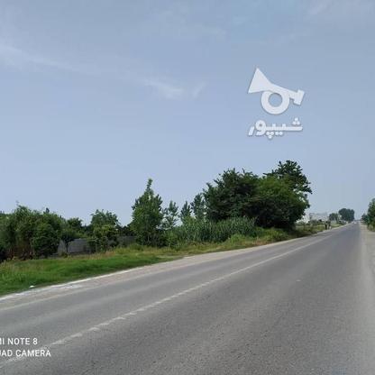 فروش زمین مسکونی 1800 متر در سرخرود در گروه خرید و فروش املاک در مازندران در شیپور-عکس3