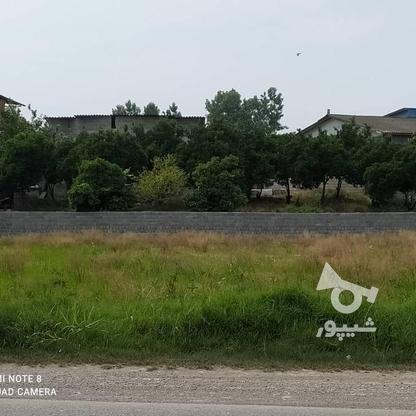 فروش زمین مسکونی 1800 متر در سرخرود در گروه خرید و فروش املاک در مازندران در شیپور-عکس1