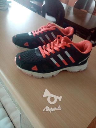 کفش adidas در گروه خرید و فروش لوازم شخصی در مازندران در شیپور-عکس1