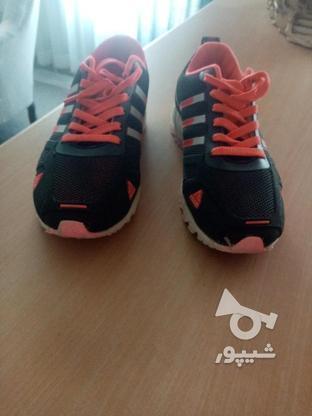 کفش adidas در گروه خرید و فروش لوازم شخصی در مازندران در شیپور-عکس2