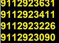 0911.292.36.92 در شیپور-عکس کوچک