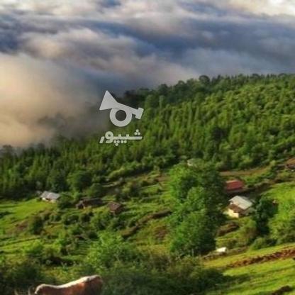 فروش زمین 267 متر ،شهرکی،سنددار در گروه خرید و فروش املاک در اصفهان در شیپور-عکس3