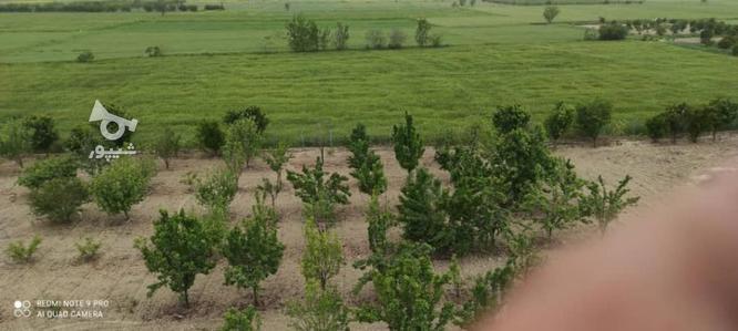 باغ 13 هزارمتر _ جاده گرگان به کردکوی در گروه خرید و فروش املاک در گلستان در شیپور-عکس3