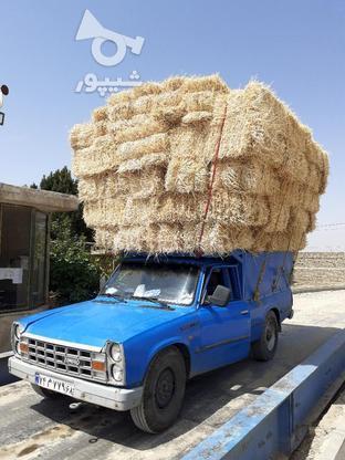 کاه ویونجه در گروه خرید و فروش خدمات و کسب و کار در البرز در شیپور-عکس3