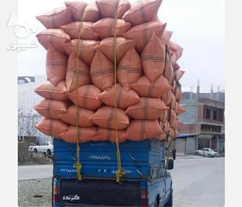 کاه ویونجه در گروه خرید و فروش خدمات و کسب و کار در البرز در شیپور-عکس2