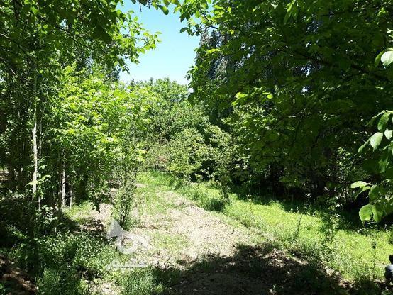 باغ روستای آستانه زیر قیمت فوری در گروه خرید و فروش املاک در سمنان در شیپور-عکس5