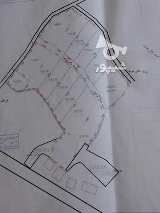 قطعه زمینی جهت ساخت در گروه خرید و فروش املاک در گیلان در شیپور-عکس3